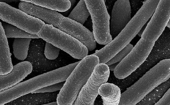 E.Coli แบคทีเรียกลายพันธุ์จากยีน mcr-1 (columbiaariverkeeper.org)