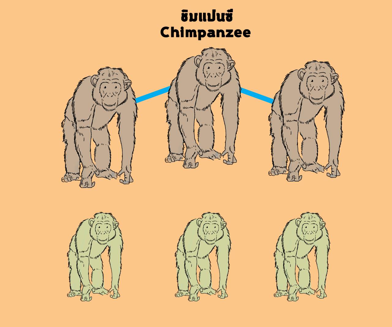 ชิมแปนซี
