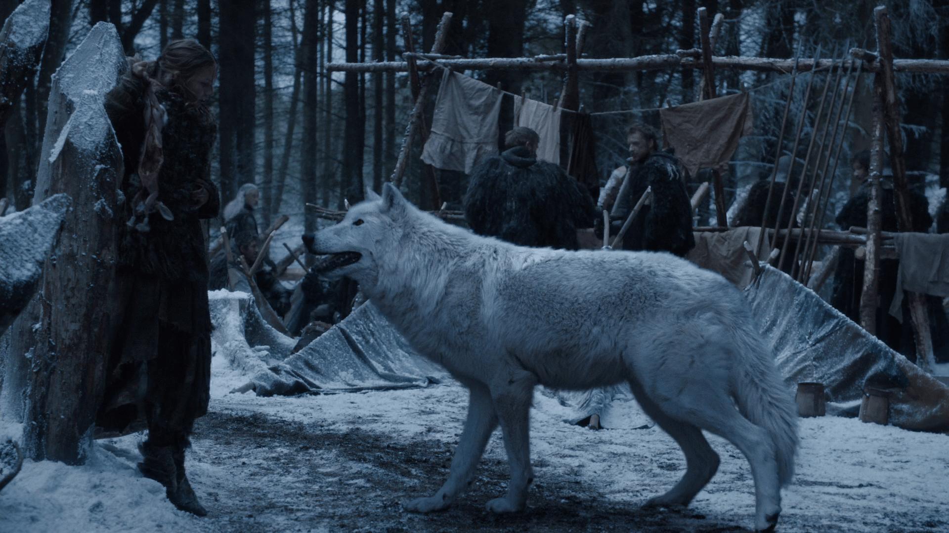 Ghost สุนัขป่าแสนรู้คู่ซี้ Jon Snow (Photo:HBO)