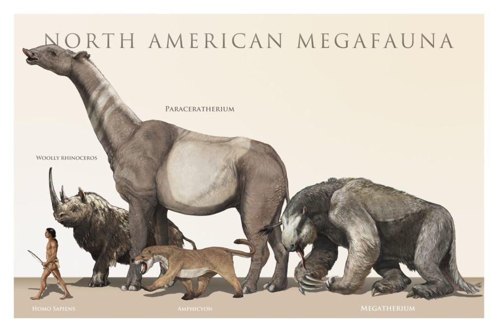กลุ่มสัตว์ใหญ่ (Megafauna) ได้รับอิทธิพลจากการขยายเขตแดนของมนุษย์