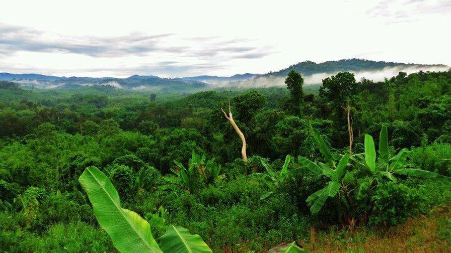 กัมพูชายังคงซ่อนความลับทางโบราณคดีอยู่อีกมาก แต่ป่าดิบที่ปกคลุมทำให้ยากในการเดินเท้าเข้าสำรวจ (Photo : tomystour)
