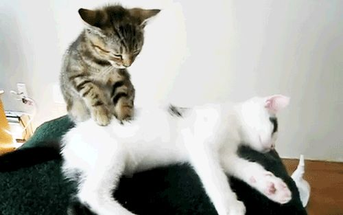 Why-do-cats-Knead-5-gap