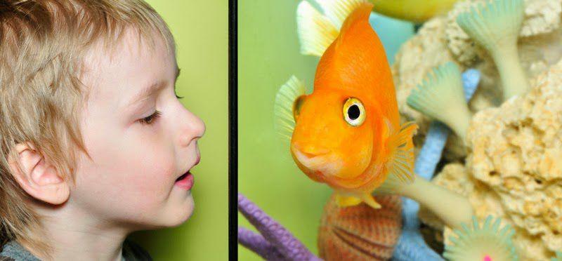 shutterstock_99029792_boyandfish