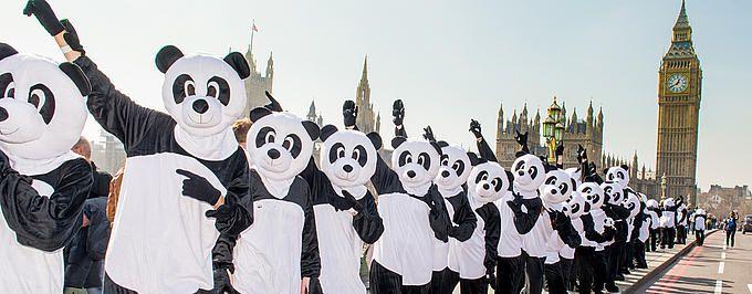 (Photo:WWF)