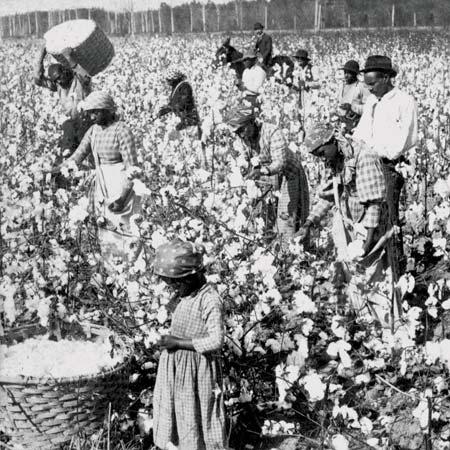 แรงงานทาสผิวสีในไร่ฝ้าย, Britannica.com