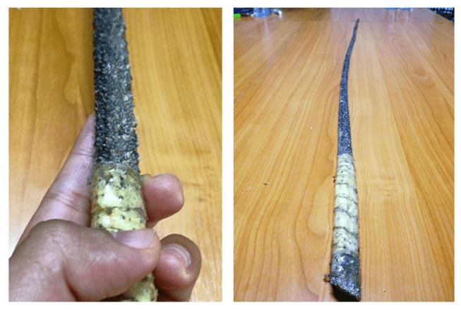แส้หางกระเบน หนึ่งในอุปกรณ์ลงโทษบนเรือประมง, ภาพจากรายงานของ TCIJ, tcijthai.com