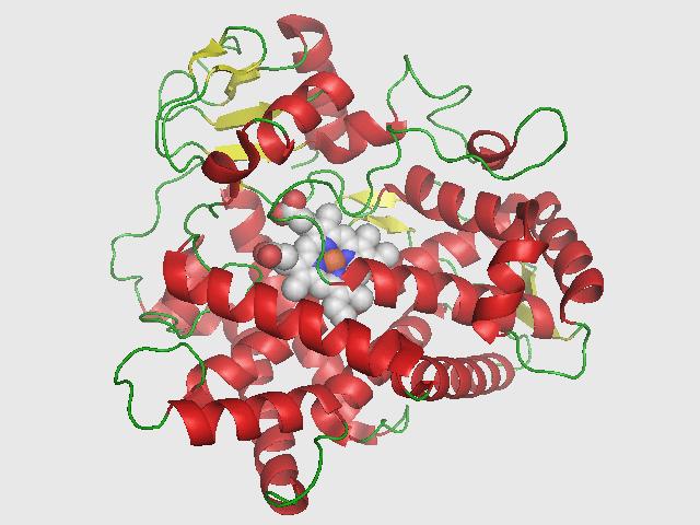 cyp2d6_structure