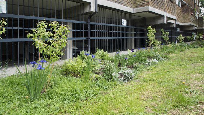lost-effra-rain-gardens-looking-lovely-df9655313350af2b58792add1239b426