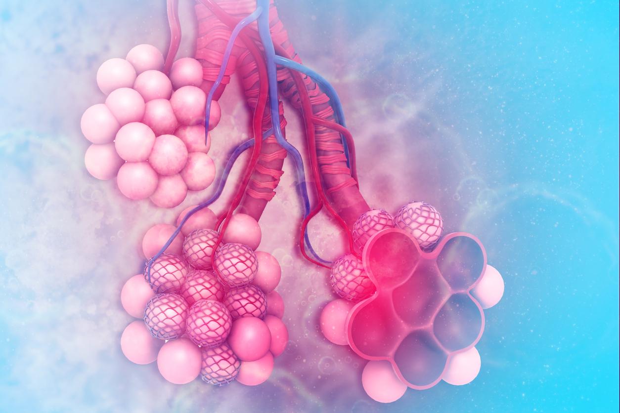 Alveoli (ถุงลม) ในปอด